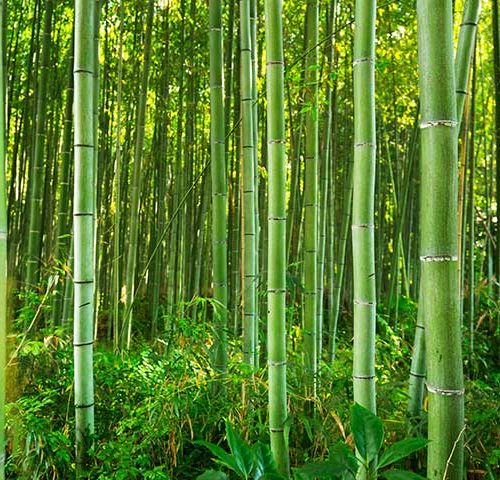 How Success is Like Chinese Bamboo